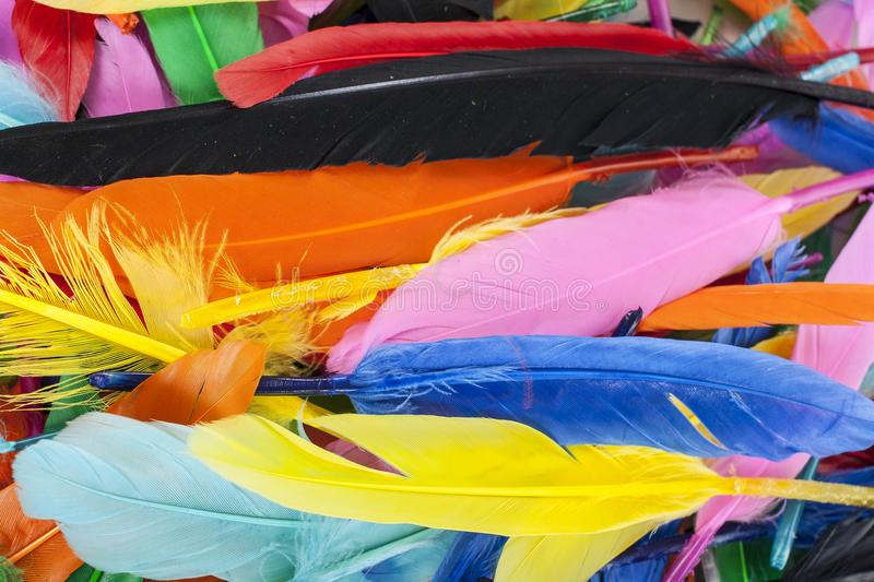 Colorful feathers. Parrot colors duck feather texture. stock images