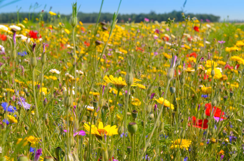 Colorful field of wild flowers stock photo