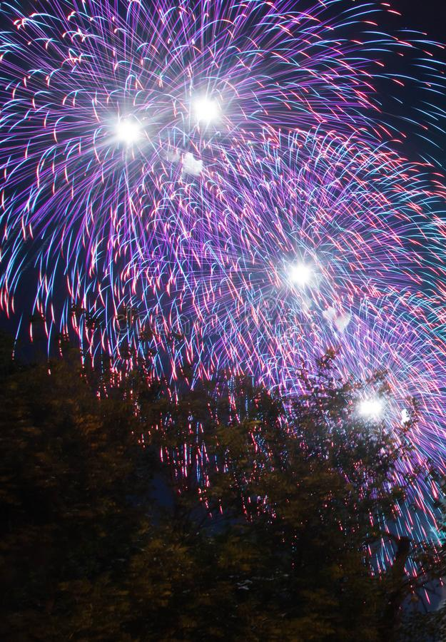 Colorful fireworks on holiday above the trees stock photo