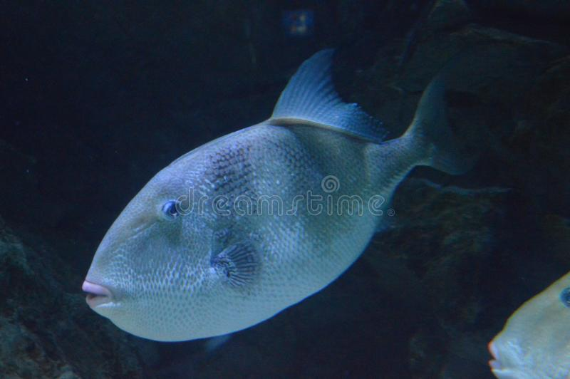 Colorful fish in aquarium, closeup stock photography