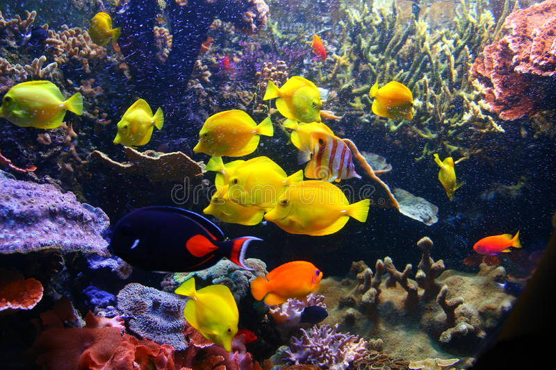 Download Colorful fish and coral stock photo. Image of coral, tourism - 9586900