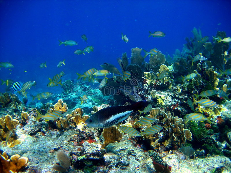 Colorful fish in coral reef. Underwater photo of various colorful fish in a coral reef stock photo