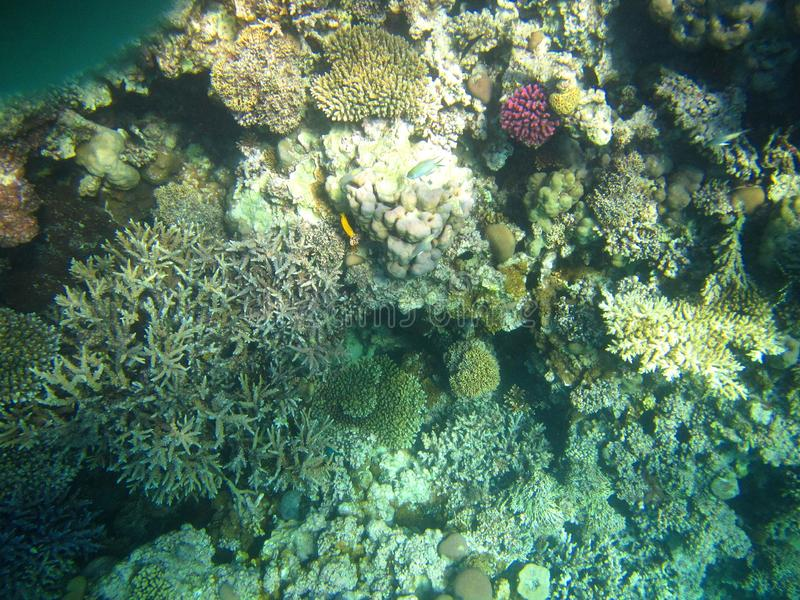 Colorful fish and coral reef, Egypt stock photography