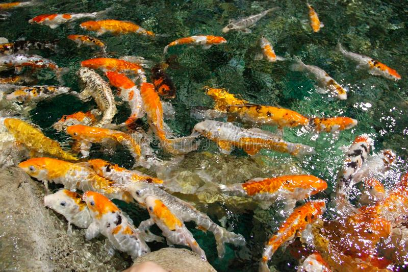 Colorful fish in sea water stock photos