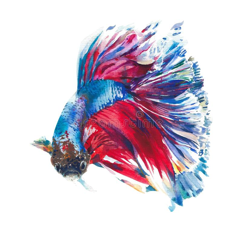 Colorful fish tropical creature tank fish pet watercolor painting illustration isolated on white background royalty free illustration