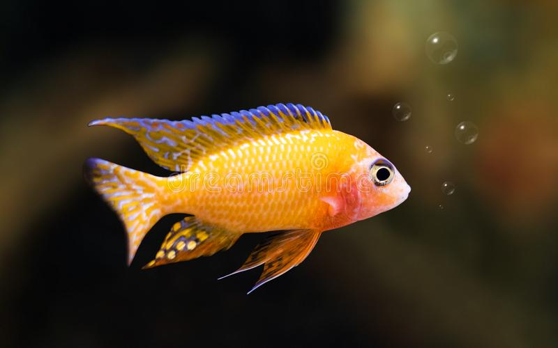Colorful fish on underwater background with bubbles. Freedom concept stock image