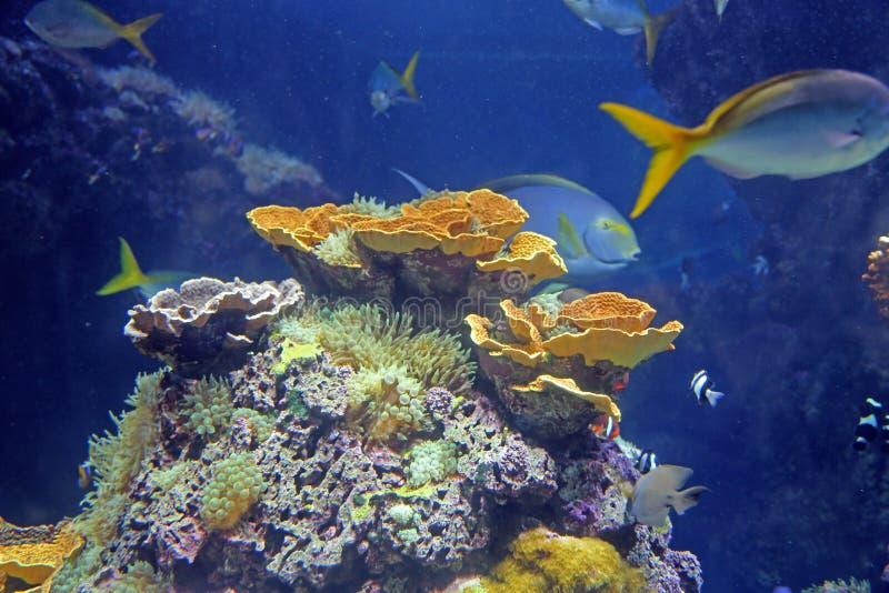 Colorful fish and underwater vegetation in the aquarium stock photo
