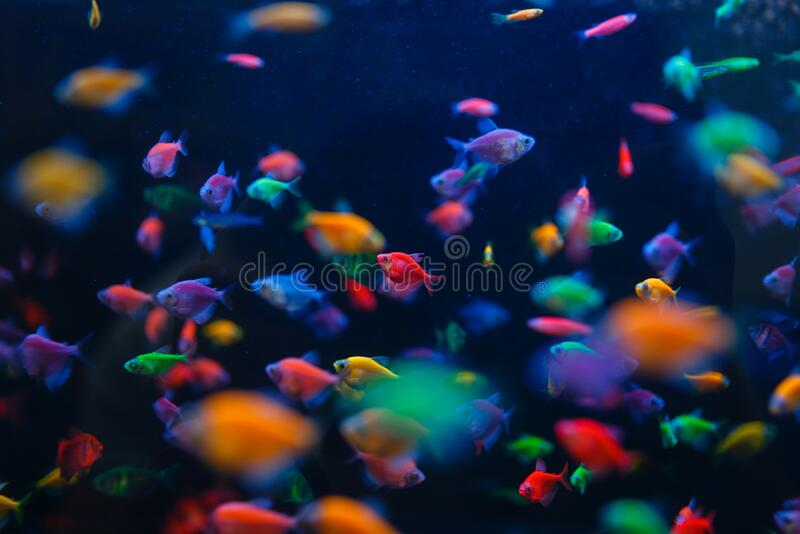 31 647 Fish Store Photos Free Royalty Free Stock Photos From Dreamstime