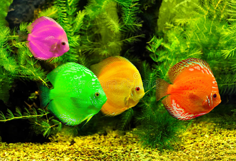 Download Colorful fishes stock photo. Image of bubble, nobody - 16075906