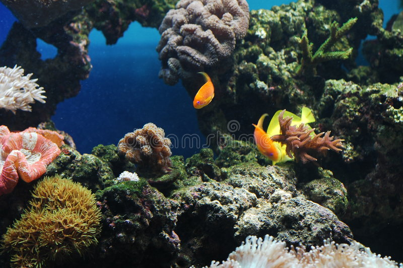 Colorful Fishes. Fish moving about in a calm manner