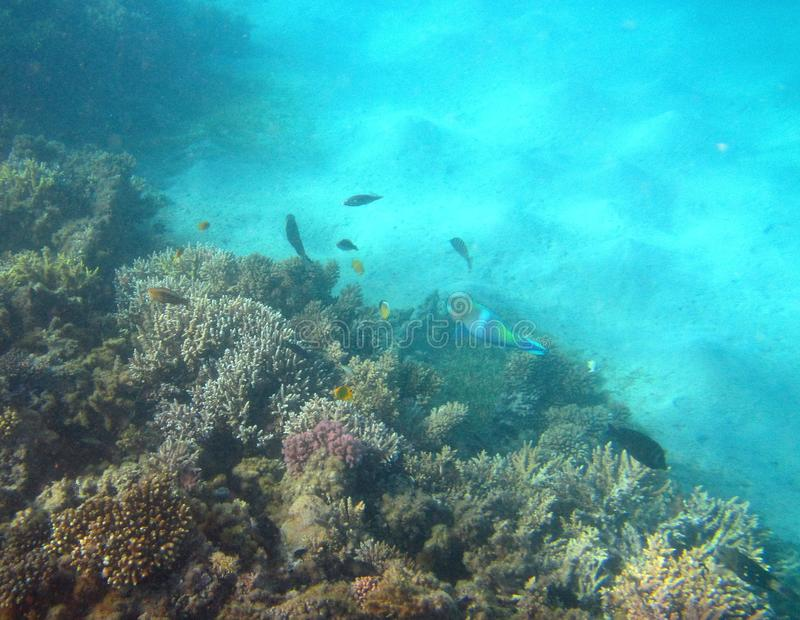 Colorful fishes and coral reef, Egypt stock images