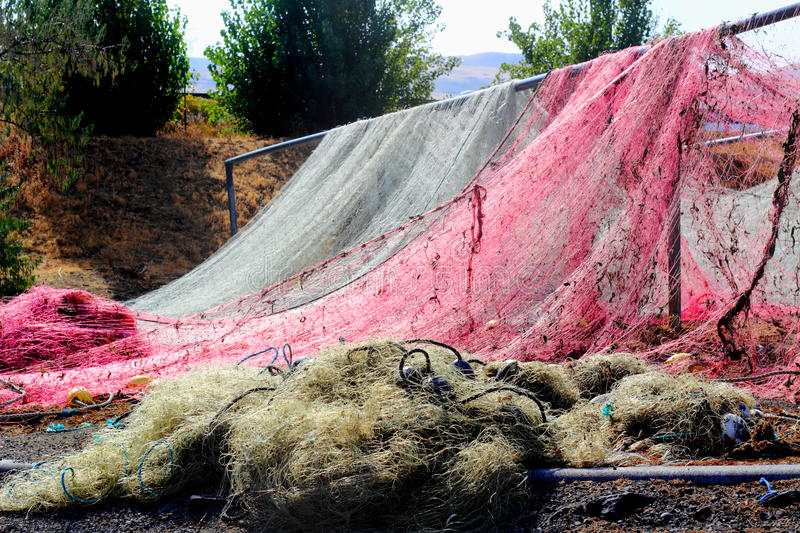 Colorful Fishing Nets Drying royalty free stock photography