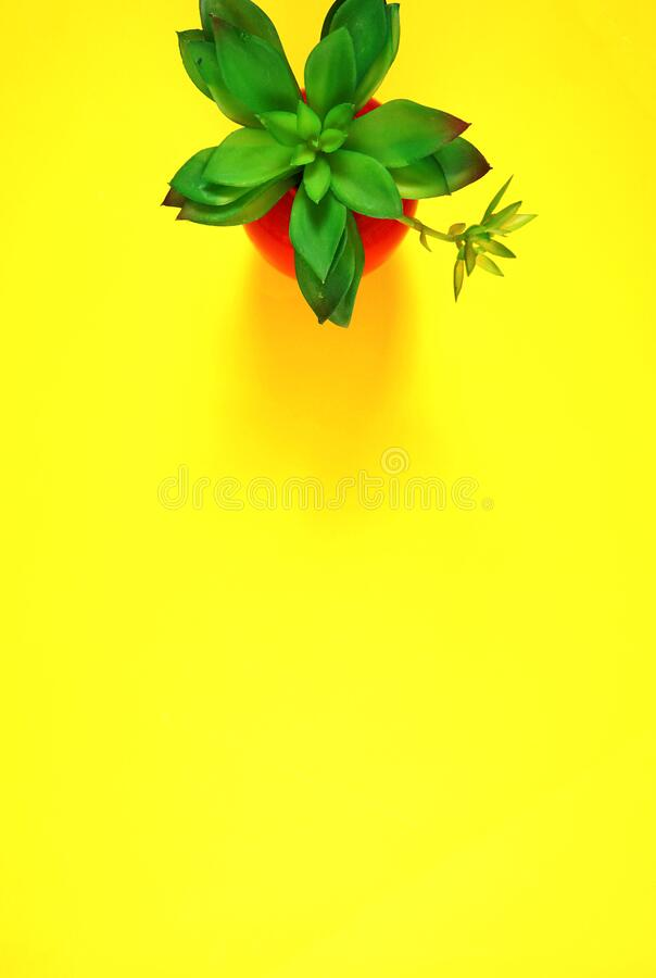 Colorful flat lay with stylish potted succulent on yellow background stock images