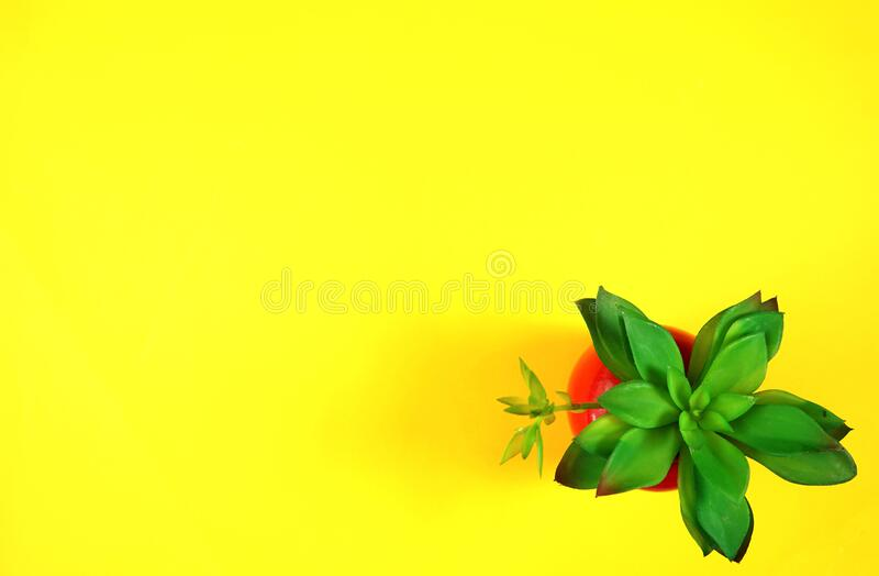 Colorful flat lay with stylish potted succulent on yellow background stock photography
