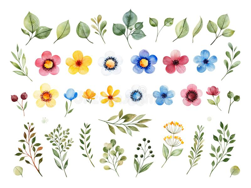 Colorful floral collection with multicolored flowers,leaves,branches,berries. And more. Set with 40 watercolor elements.Perfect for wedding,invitations,greeting royalty free illustration