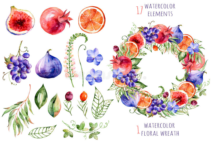 Colorful floral and fruits collection with orchids,flowers,leaves,pomegranate,grape,orange,figs and berries. royalty free illustration