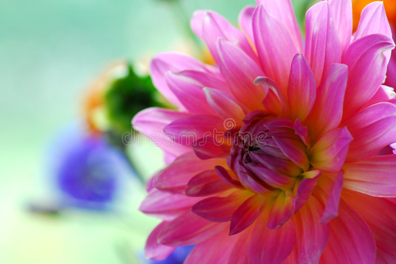 Colorful flower stock image