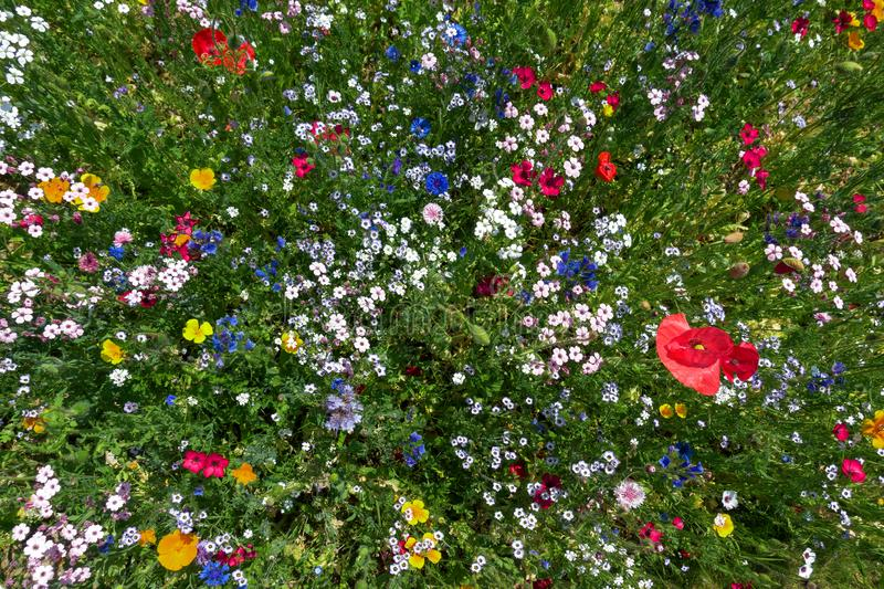 Colorful flower bed at an angle from above royalty free stock photography