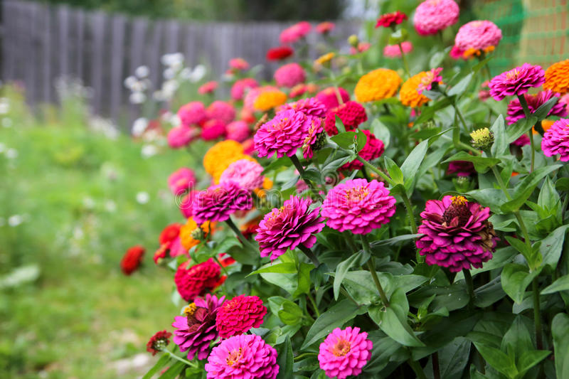 Colorful flower bed stock photo