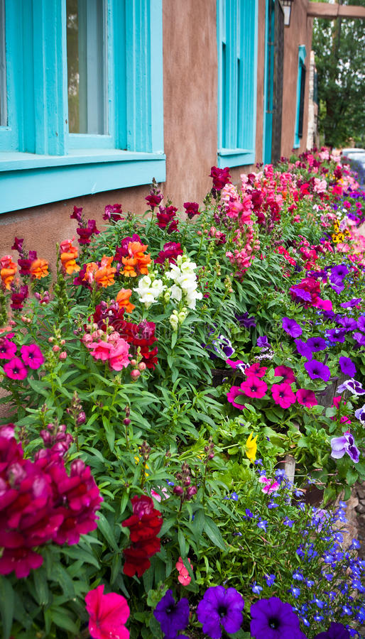 Colorful flower bed in New Mexico. Flower bed bursting with color under turquoise framed windows in new Mexico stock image
