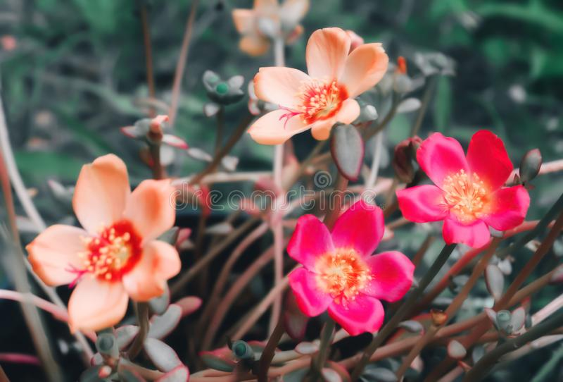 Colorful  flower blooming  autumn  ,spring nature background stock images