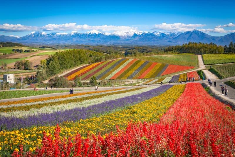 Colorful flower field on the hill at Shikisai no oka farm, Biei, Hokkaido, Japan stock images