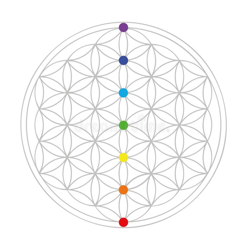Colorful flower of life geometry vector illustration