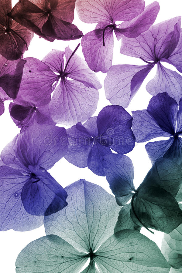 Colorful flower petal closeup stock photos