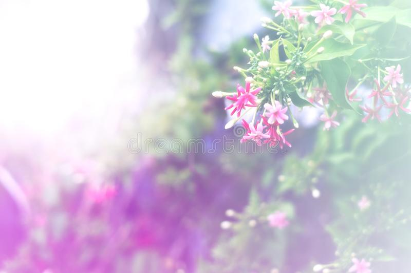 Colorful of flower with soft or selective focus for wall paper backdrop postcard use stock photo