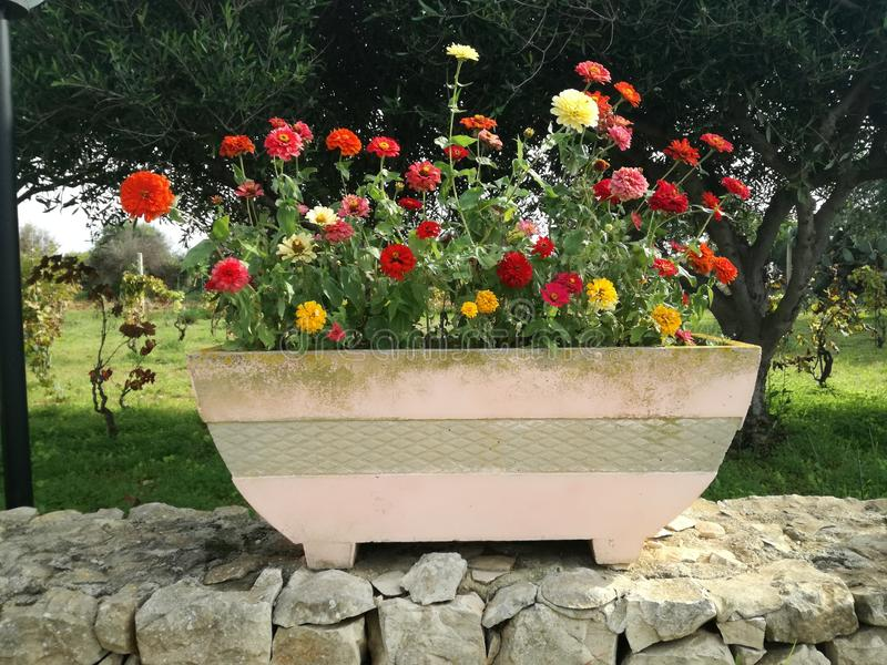 Colorful flowerpot with spring flowers. In a garden. Spring is in the air stock photo