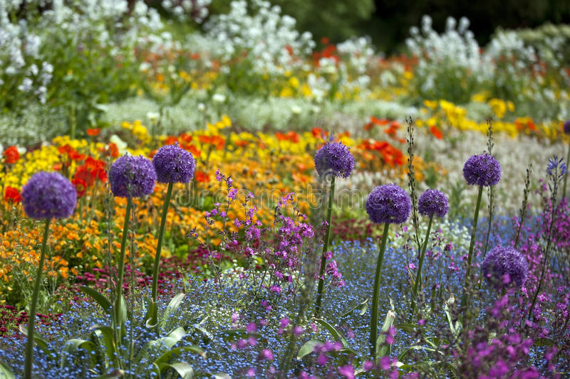 Colorful flowers. A pretty flowers of the island Meinau Constance, Germany royalty free stock photos