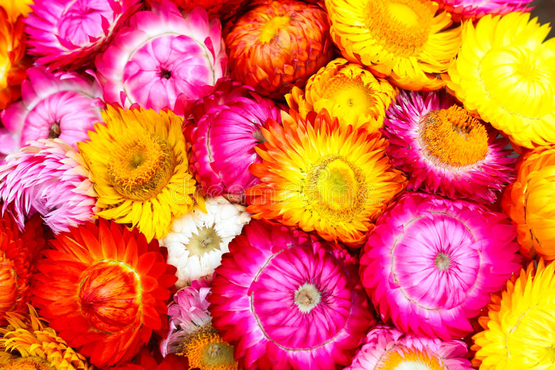 Download Colorful flowers stock illustration. Image of modern - 26543361