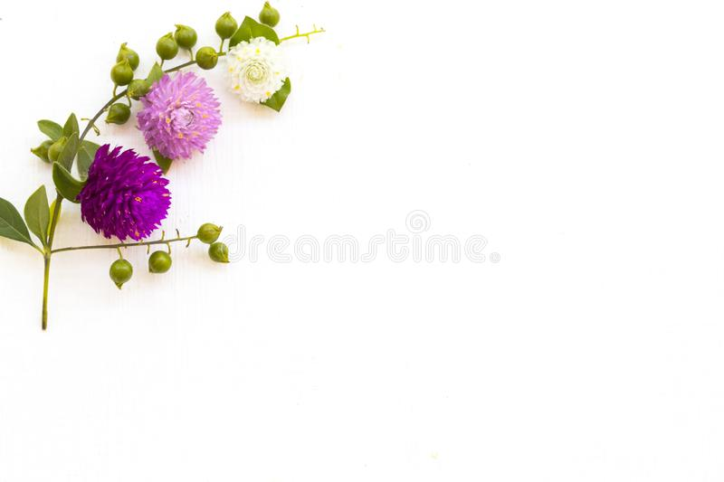 Colorful flowers amaranth purple ,white and pink color local flora of asia arrangement flat lay postcard. Style on background white wooden stock photo