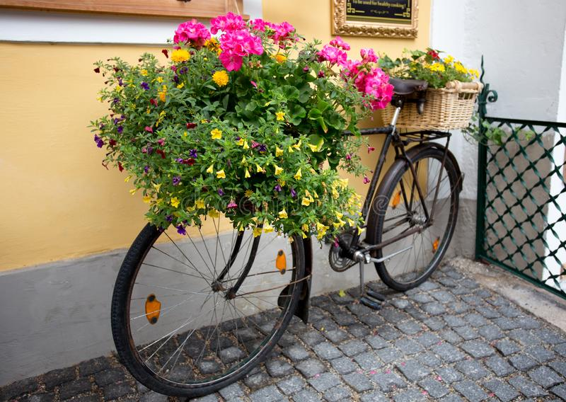 Colorful flowers on bicycle as decoration stock photography
