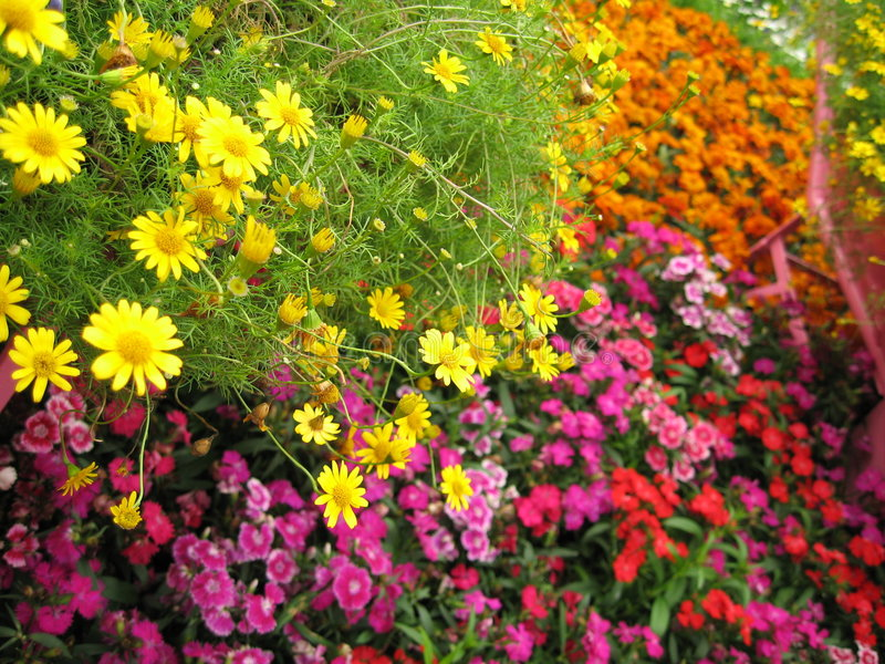 Download Colorful flowers in bloom stock photo. Image of different - 733332