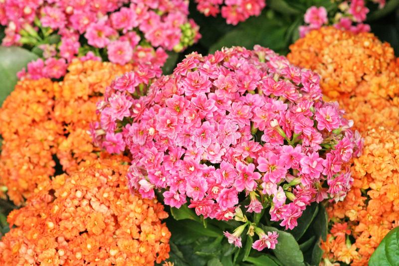 Colorful flowers blooming royalty free stock images