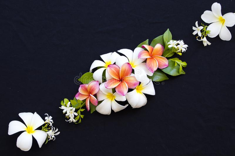 Colorful flowers frangipani locla flora of asia on black. Colorful flowers white ,orange ,pink frangipani local flora of asia arrangement flat lay postcard style royalty free stock photos
