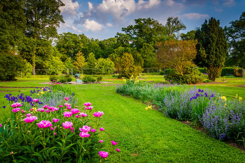 Colorful flowers in a garden at Druid Hill Park, in Baltimore, M royalty free stock photo
