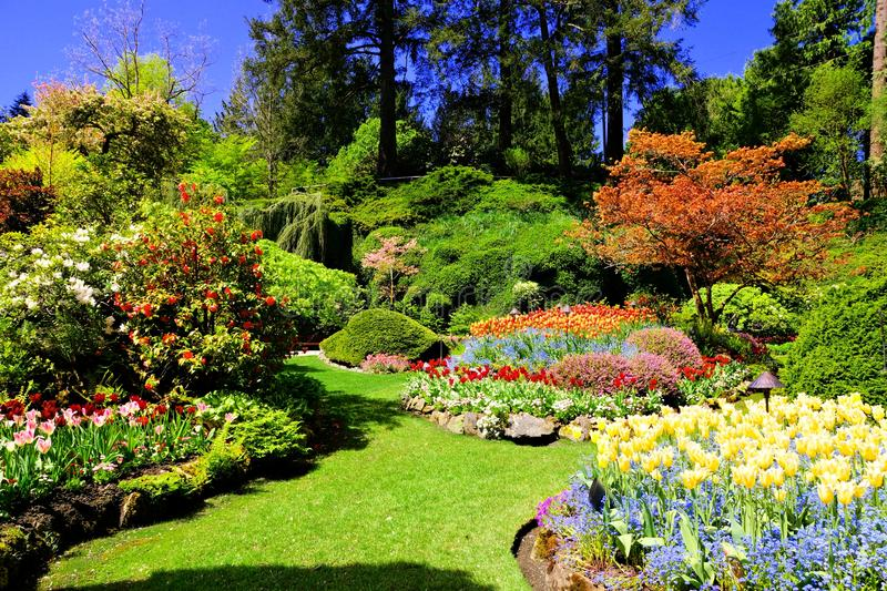 Colorful flowers of a garden at springtime victoria canada stock download colorful flowers of a garden at springtime victoria canada stock photo image thecheapjerseys Image collections