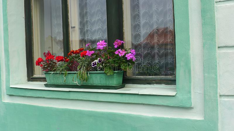 Colorful flowers in the green cement pot in front of the window.  stock photography