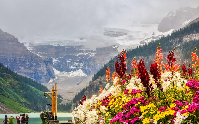 Colorful flowers at Lake Louise. Colorful flowers with the glacier and Lake Louise in the background at Lake Louise, Banf National Park, Alberta, Canada royalty free stock photos