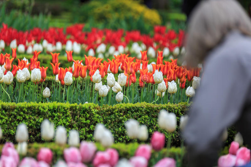 Colorful flowers in a large garden. With a green background stock photos