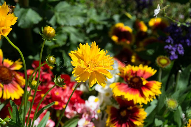 Colorful flowers in the mountain stock images