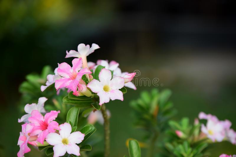 Colorful flowers in nature.color in the garden. Colorful flowers in nature.color in the garden next to the house. Beautiful flowers in the garden next to the stock photos
