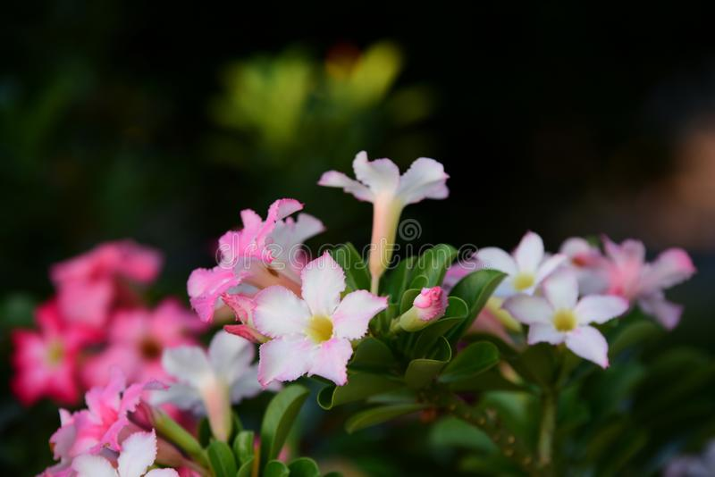 Colorful flowers in nature.color in the garden. Colorful flowers in nature.color in the garden next to the house. Beautiful flowers in the garden next to the stock image
