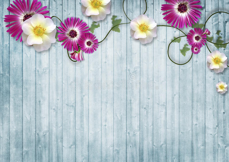 Colorful flowers over blue wooden background with copy space stock photography