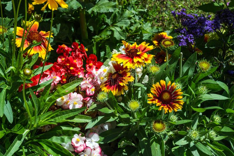 Colorful flowers in the park stock photo