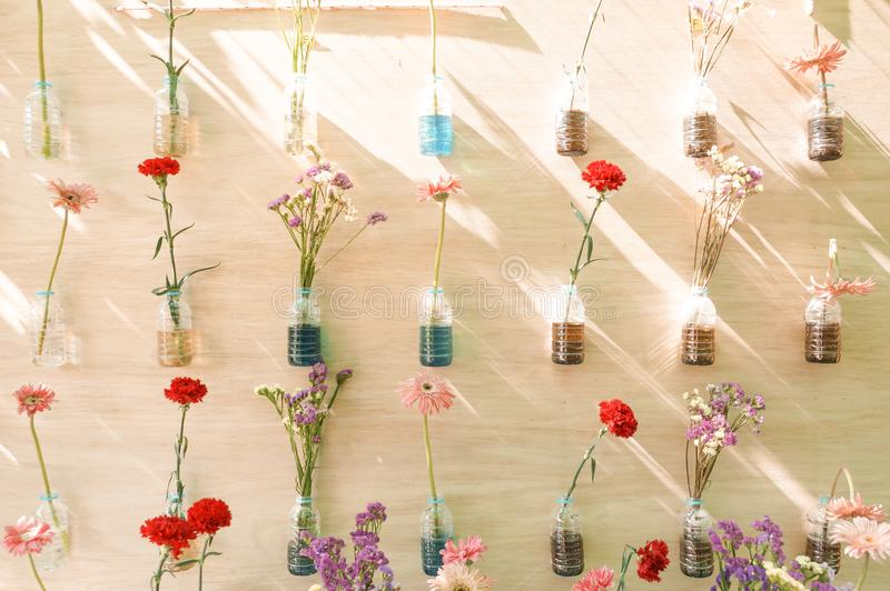 Flowers in plastic bottles hung on wooden wall royalty free stock photos