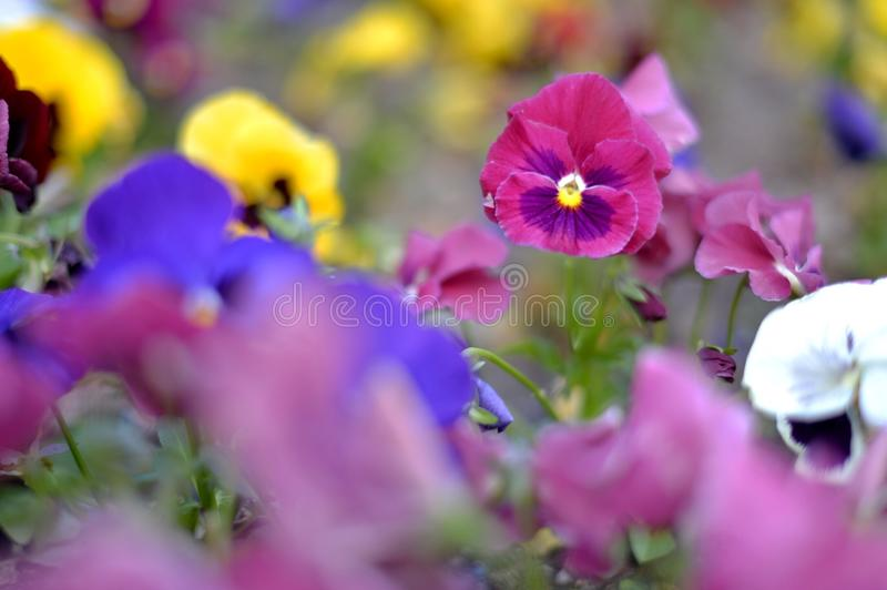 Colorful flowers stock photography