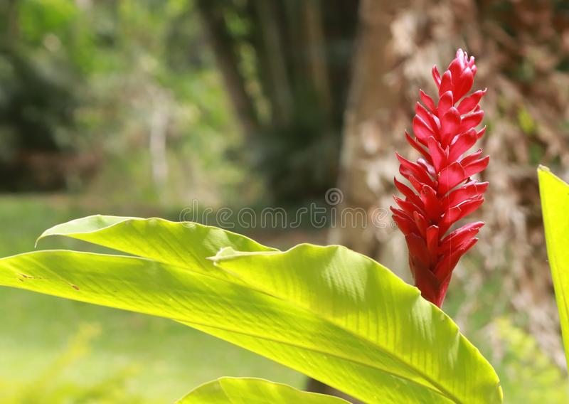 Colorful flowers of the season are always beautiful royalty free stock image